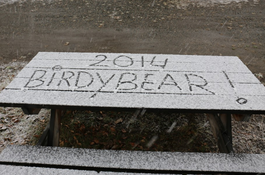 Birdybear snowfall